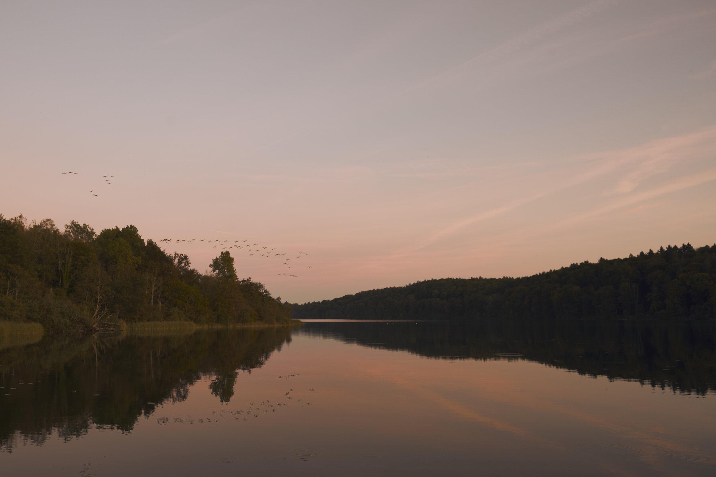 Untitled Goose Photo